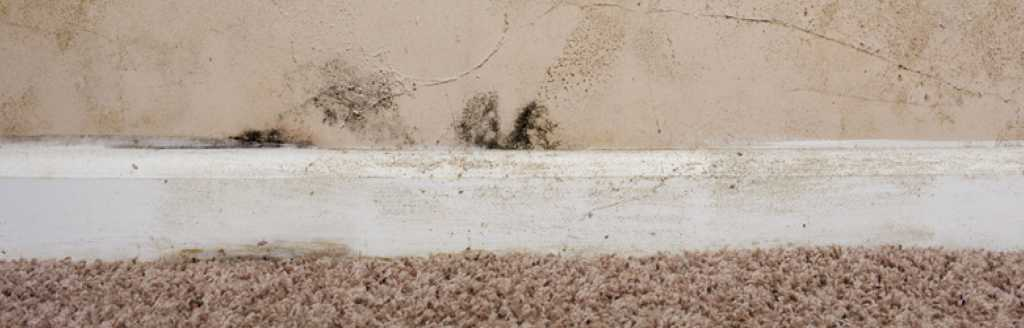 Dealing with damp in older properties